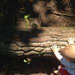 Bester Spielplatz der Stadt – Teil 1: Der Wald