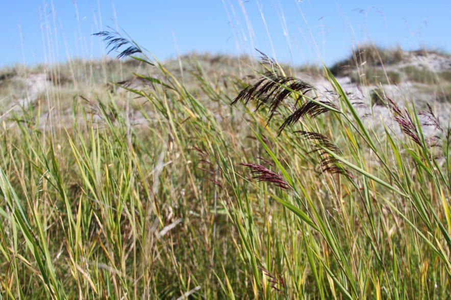 Ostsee Prerow Zelten in den Dünen