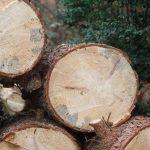 Vom Ziele verwirklichen und Bäume ausreißen