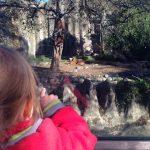 Der Zoo, ein Kindervergnügungspark